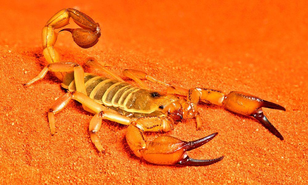 Galera de imgenes: Los animales ms peligrosos del mundo 30