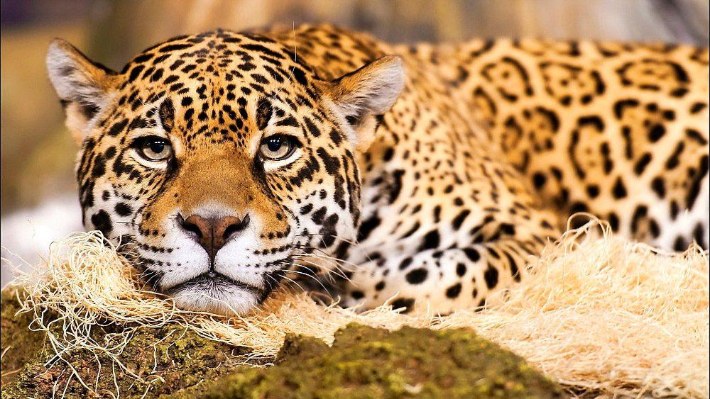 Los animales m s peligrosos de la selva - Mas goy fornells de la selva ...
