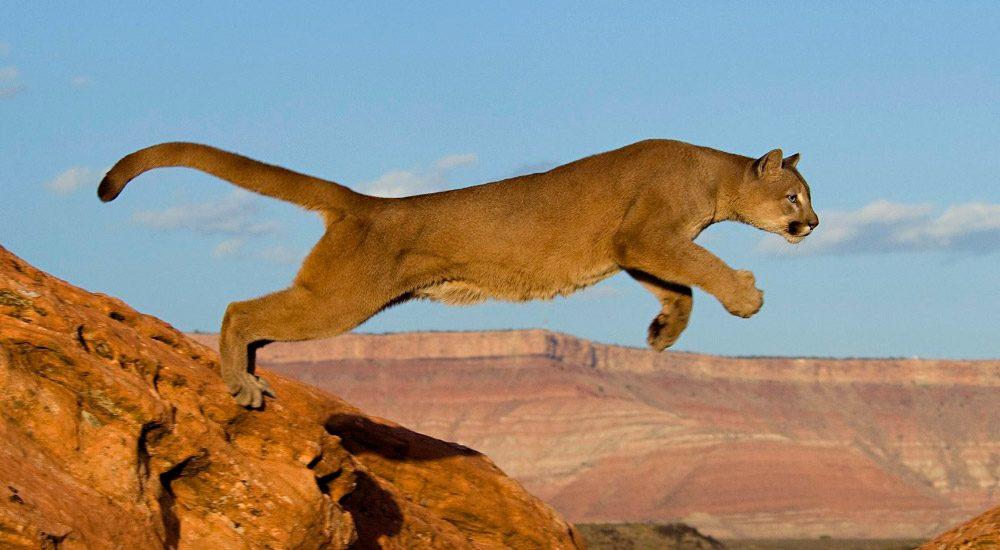Los animales m s peligrosos del desierto for Cat goes fishing wiki