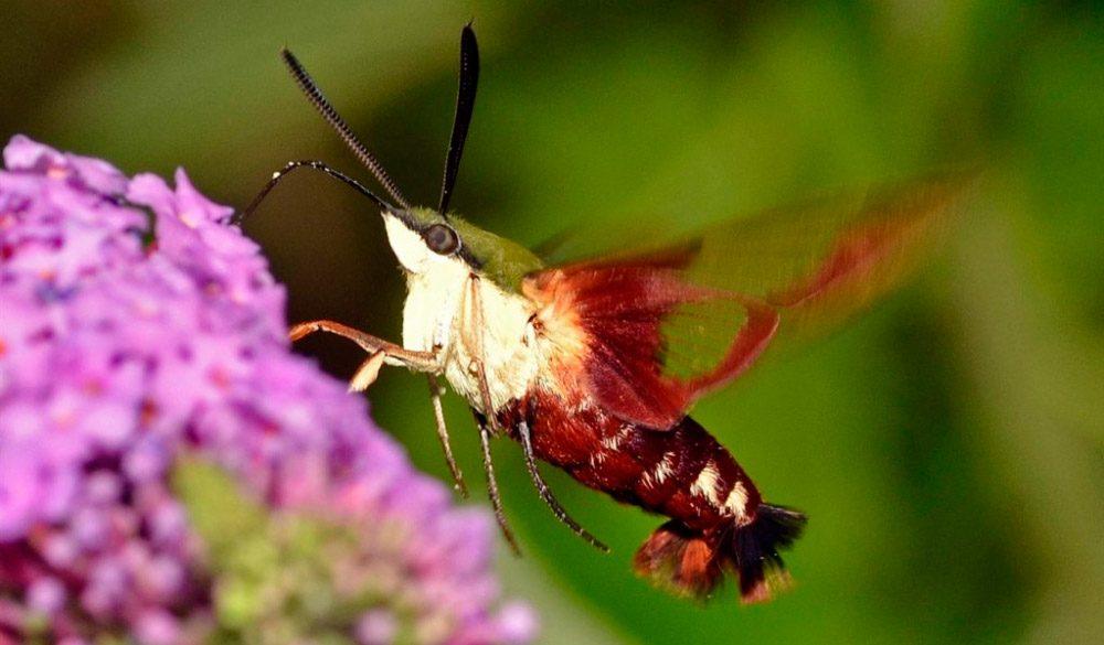 Los insectos m s raros del mundo - Insectos en casa fotos ...