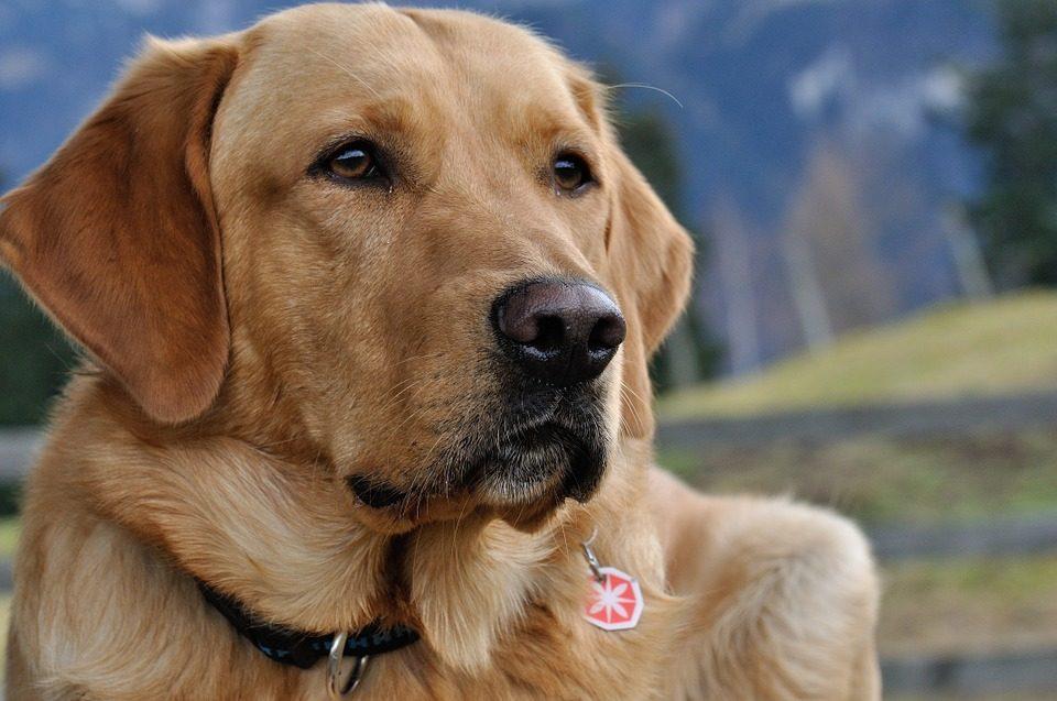 Los 12 perros m s bonitos del mundo - Fotos de los cuartos mas bonitos del mundo ...