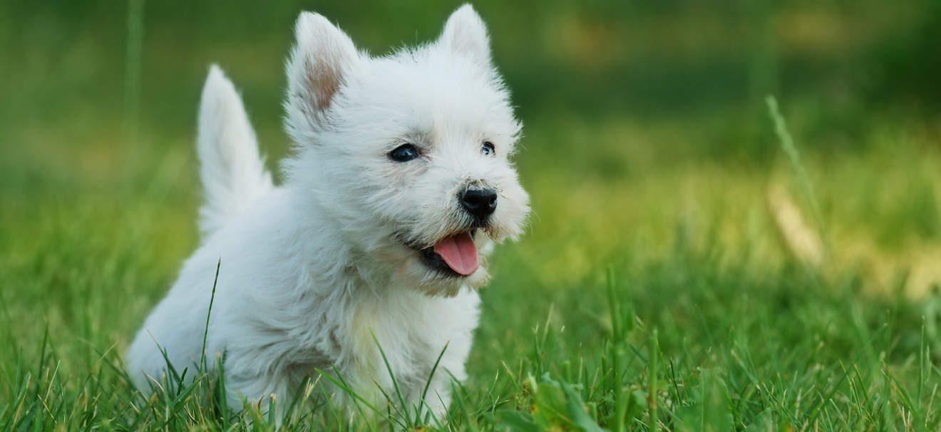 Los 12 perros m s bonitos del mundo for Fotos de los cuartos mas bonitos del mundo