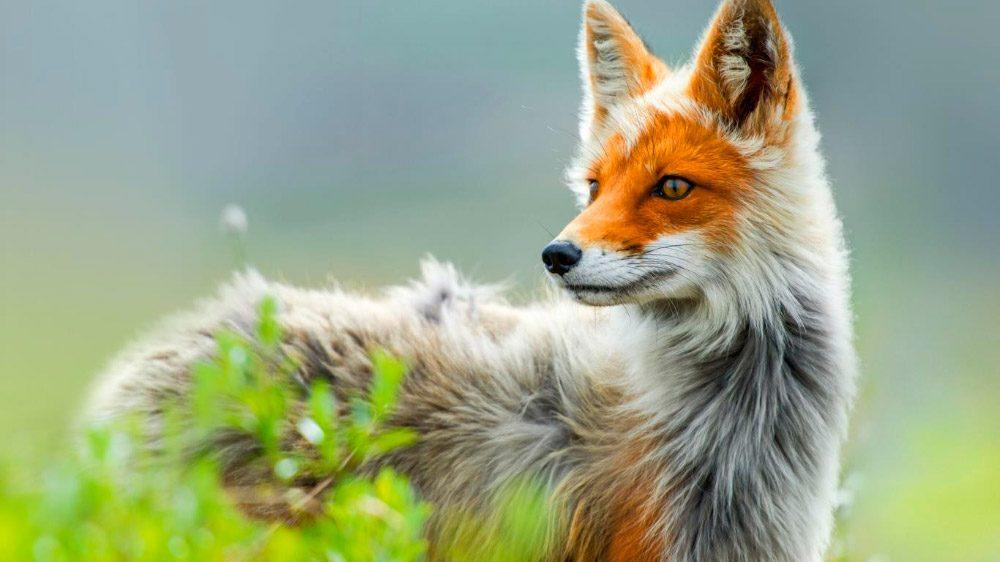 Los animales más bonitos del mundo